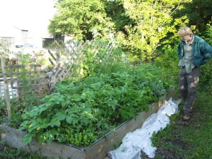 Doug Osborne checks out the WISEGUYS men's health group's plot at the Blatchley Community Gardens in August 2008