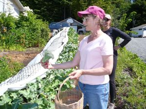 A woman checks out some broccoli she picked in July at Down To Earth u-pick garden in Sitka