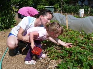 Down To Earth u-pick garden is a good place for families to pick fruits and veggies together