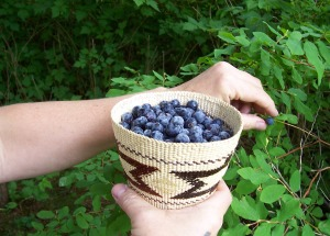 Picking blueberries in Sitka