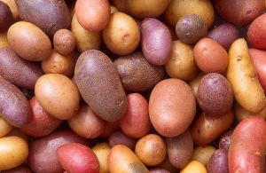 Photo courtesy of USDA Agricultural Research Service Image Gallery / Photo by Scott Bauer -- The average American eats 142 pounds of potatoes a year, making the tubers the vegetable of choice in this country