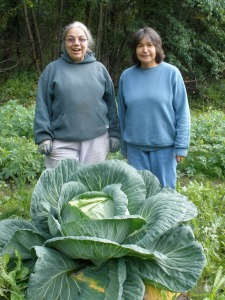 Lani Hotch and Bev Klanott stand behind a big cabbage growing at the WISEGUYS potato patch in Klukwan. The cabbage weighed nearly 30 pounds when it was harvested.