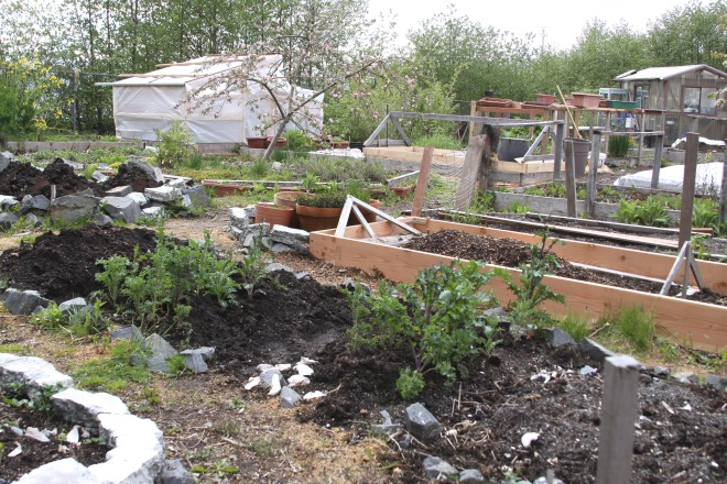 Plots at various stages of planting at Blatchley Community Garden