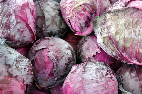 Red Cabbage From The Glacier Valley Farm CSA Photostream By South Anchorage Farmers Market Reporter Alison