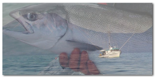 salmon boat header