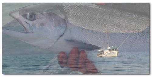 salmon boat header