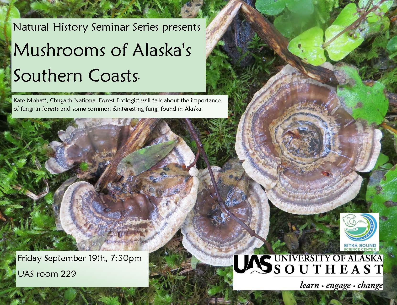 Mushrooms sitka local foods network for Alaskan cuisine history