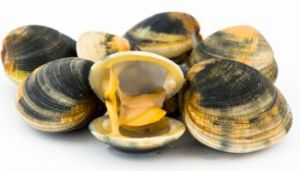 raw-clams-350