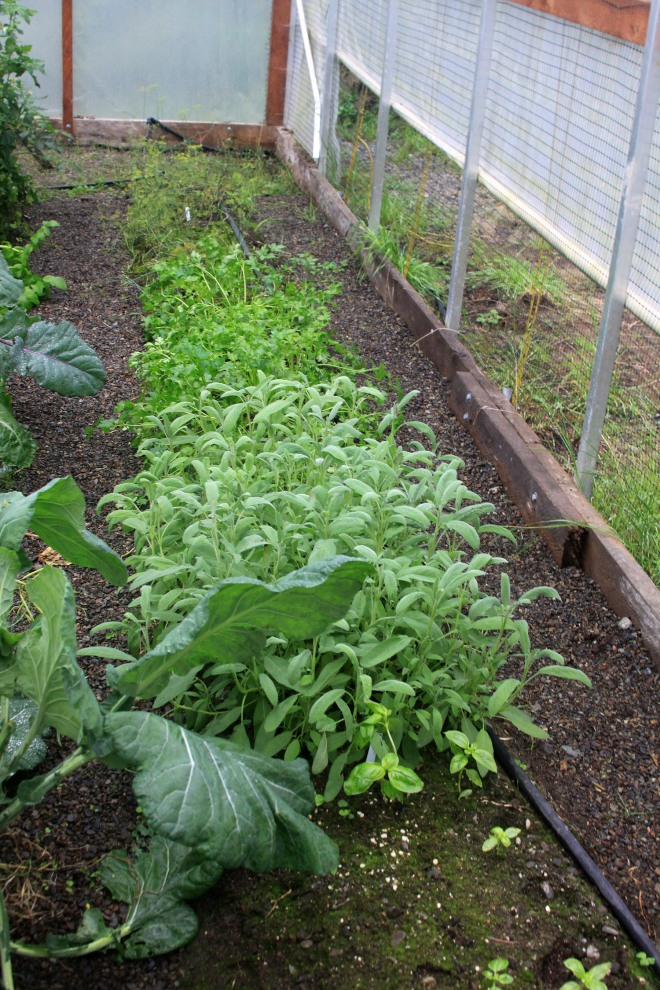 GreensInUAFHoopHouse