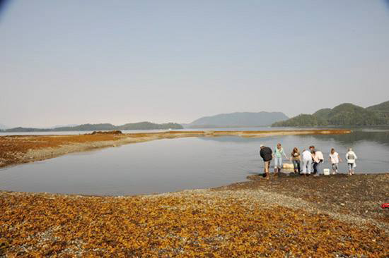 Clam diggers work the beach at Starrigavan in this file photo. The Sitka Tribe of Alaska is warning Sitkans against harvesting clams in the area due to a harmful algae detected Monday, June 8, 2015. (Daily Sitka Sentinel file photo by James Poulson)