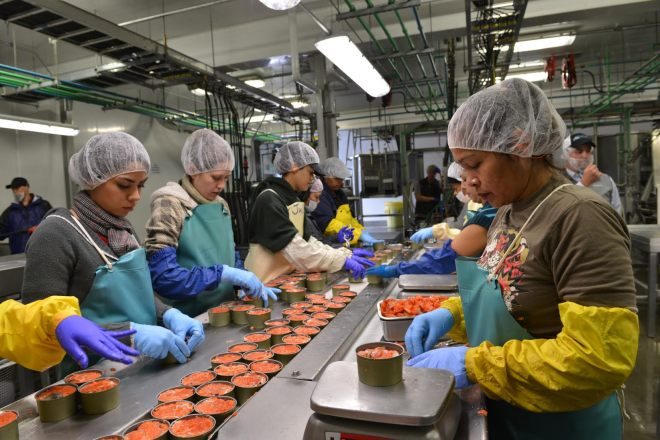 Workers pack sockeye salmon on the final day of seasonal canning operations Tuesday (Sept. 8, 2015) at Silver Bay Seafoods. (Daily Sitka Sentinel Photo by James Poulson)