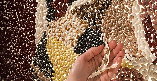 dry-beans-2-e1411748636858-640x330