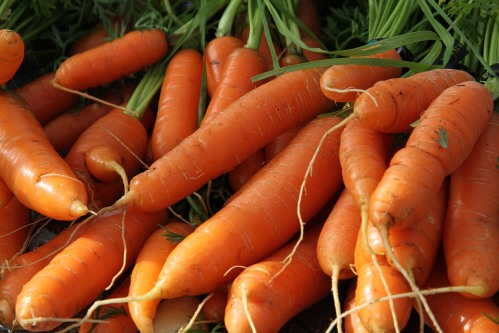 Some carrots grown at St. Peter's Fellowship Farm communal garden on sale at the Sitka Farmers Market